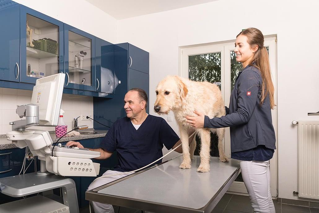 Dr. Wilmering mit TMFA und Hund am Behandlungstisch