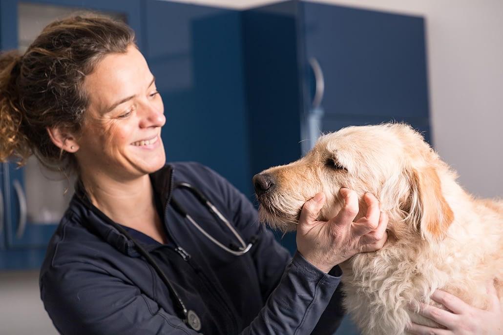 Dr. Schneller mit Hund auf Behandlungstisch